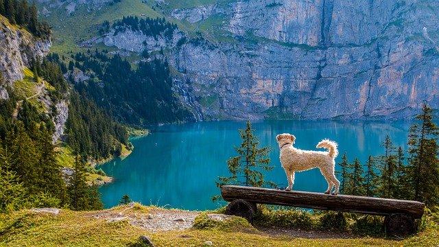 スイスの画像